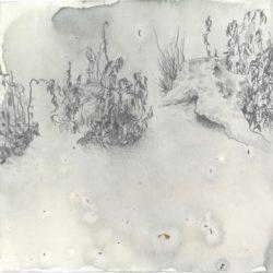 elissa-callen-calendula-ink-graphite-on-paper